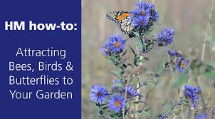 how to grow a bee and monarch butterfly garden hm etc