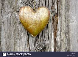 metal heart hanging on tree bark as symbol for love stock photo