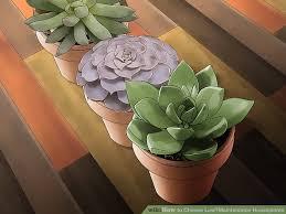 3 ways to choose low u2010maintenance houseplants wikihow
