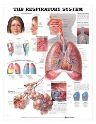 Pictures Of The Human Body Internal Organs Alternative Views Diverse Pinterest Human Body Bodies And