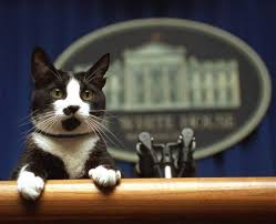 thanksgiving cat gif first pets dogs cats and a raccoon among past presidential best