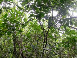 Tropical Dry Forest Animals And Plants - the pedilanthus page