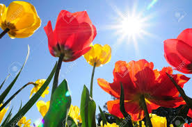 Flower Pictures Flowers And Sunshine Flower Inspiration