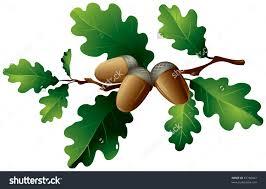 oak nut clipart clipground