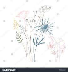 wild flowers in wild meadows vector illustration wild meadow flowers herbs stock vector