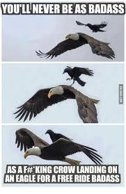 Storm Crow Meme - 25 best memes about badass bald eagle badass bald eagle memes