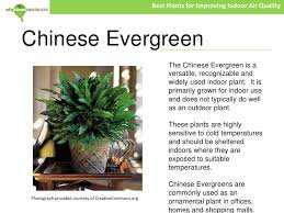 best plants for air quality best plants for improving indoor air quality 5 728 jpg cb 1278698667