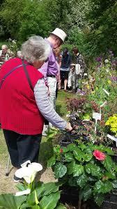 a breath of fresh air plant lovers u0027 fair frenzy