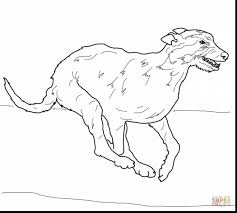 unbelievable irish wolfhound coloring pages with celtic coloring