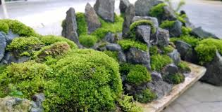 moss penjing for your penjing bonsai diy bonsai pinterest