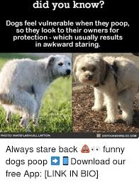 Dog Poop Meme - know did you know dogs feel vulnerable when they poop so they look