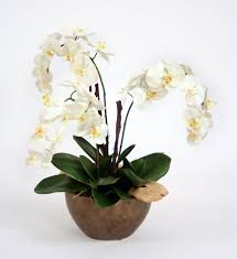 orchid plant distinctive designs white orchid plant with bark and