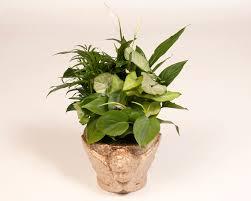 indoor plant arrangements indoor plant arrangement photo tropical distributors inc