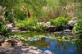 pond installation maintenance phoenix scottsdale az pond