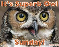 Superb Owl Meme - guess what day it is pic pleated jeans