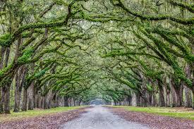 South Carolina landscapes images South carolina cleveland fine art landscape photographer jpg