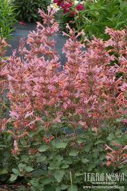 high heat plants 261 best drought tolerant heat tolerant images on pinterest