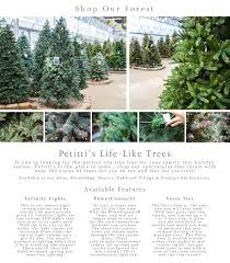the family tree garden center life like tree 1 petitti garden center