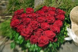 Blumen Baden Baden Stern Umfrage Zum Valentinstag Männer Verschenken Am Liebsten