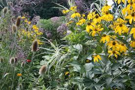 beautiful plants fafardpermaculture gardening