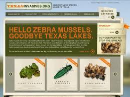 texas native plants database endangered plants lady bird johnson wildflower center