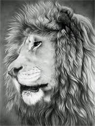 lion drawing 21 free u0026 premium designs download
