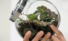 come creare un giardino fai da te giardino in bottiglia fai da te come creare un giardino
