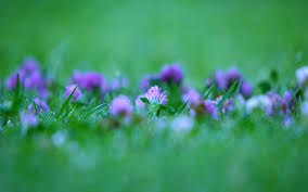வால்பேப்பர்கள் ( flowers wallpapers ) - Page 5 Images?q=tbn:ANd9GcTgP2ngeViUM-gk9TDKqyaDlW_10bAOjNhxKluIYaIoYl1l6bbO