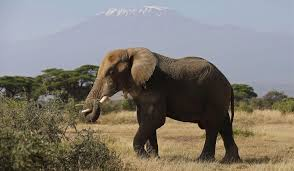 interior department twitter ban donald trump u0026 trophy hunting ban trump is right to keep the