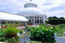 Botanic Garden Bronx by Mille Fiori Favoriti Waterlilies And Lotuses In The New York