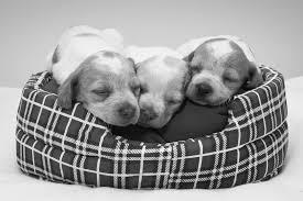 cuccie per cani tutte le offerte cascare a fagiolo cucce per cani tutte le offerte cascare a fagiolo