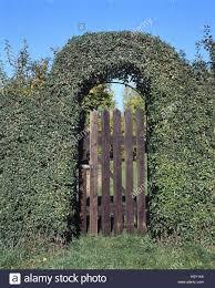 hedge arch garden goal rundobenhecke ornamental editing