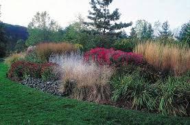 ornamental grass michigan gardener