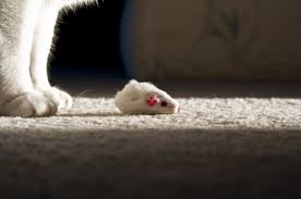 5 reasons why your cat won u0027t fix your mouse problem catseye pest