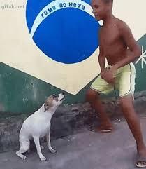 Dancing Dog Meme - brazil dog dance know your meme
