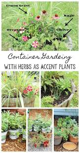 Herb Container Garden - container gardening with flowers and herbs as accent plants