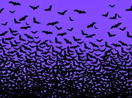 bat wallpapers 40 free bat wallpapers backgrounds on zyzixun