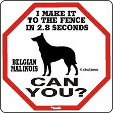belgian malinois in ohio cats and dogs belgian malinois make it to the fence in 2 8