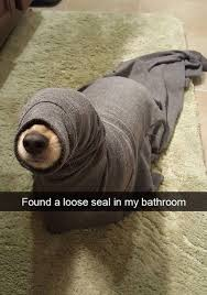 Bathroom Meme - found a loose seal in my bathroom meme guy