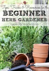 Diy Herb Garden Best 20 Herb Garden Ideas On Pinterest