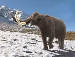 mammoth spring leogon deviantart