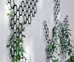 Trellis For Climbers Climbing Plants That Give Your Home A New Look