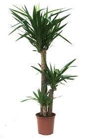 best house plants best house tropical plants bedroom ideas