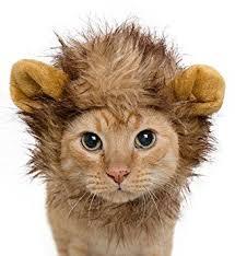 Halloween Costume Cats Amazon Lion Mane Costume Cats U0026 Dogs Free Feathered