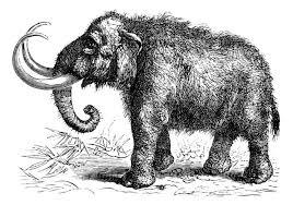 woolly mammoth scientists u0027two creating hybrid