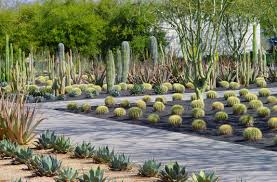 plants that live in the desert landscaping ideas arizona for space