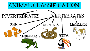 animal classification for children classifying vertebrates and