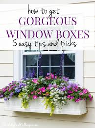 Window Boxes Planters by 5 Tips For Gorgeous Window Boxes Window Box And Gardens