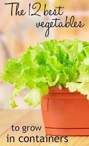 best 25 apartment vegetable garden ideas on pinterest container