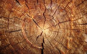 50 hd wood wallpapers for free